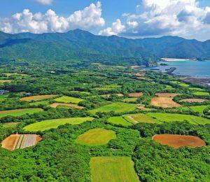 緑や茶色の円畑が複雑な模様を描く。奥に見える砂浜は頓泊海水浴場=五島市三井楽町